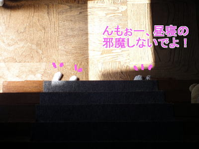 wDSC03242-10.jpg