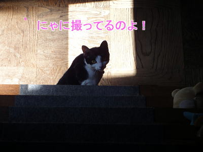 wDSC03242-9.jpg
