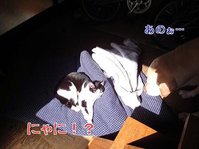 wDSC01600-2.jpg